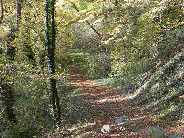 Chemin d'automne... tristesse et joie