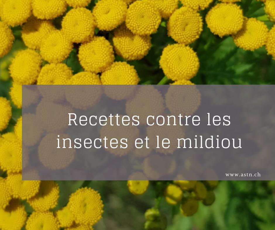Recettes contre les insectes et le mildiou BIO